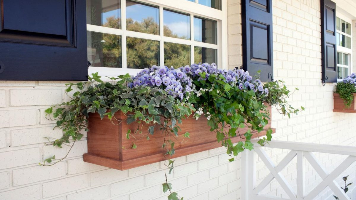 What to Plant in Your Window Boxes