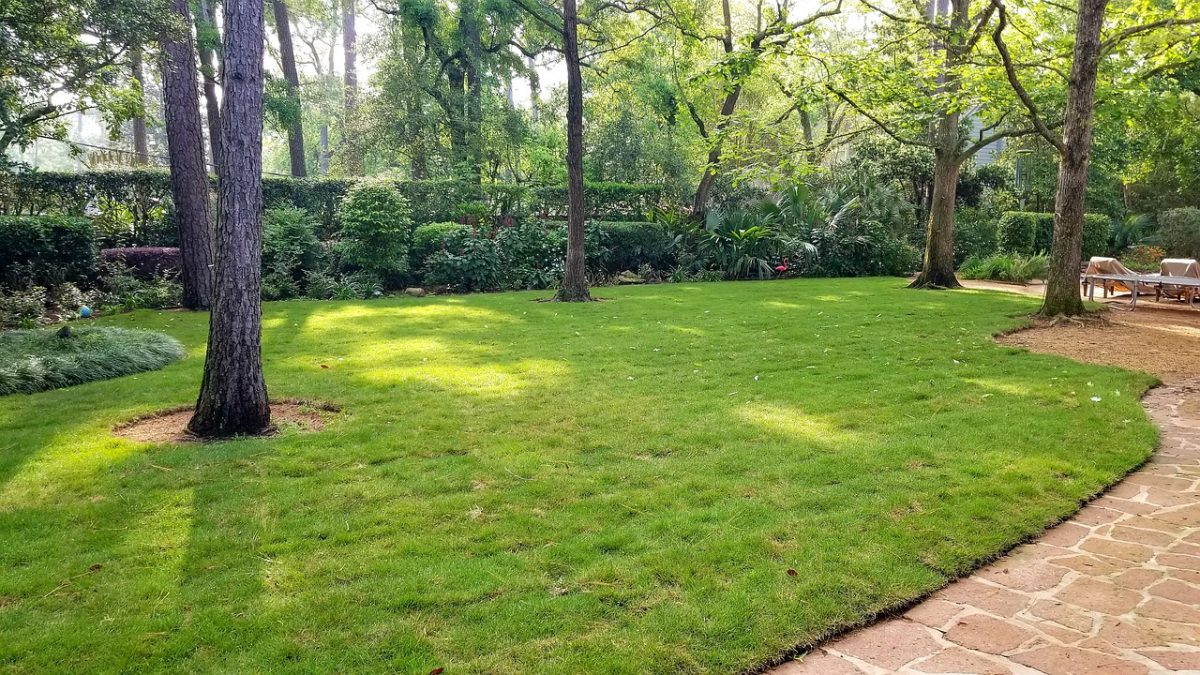 Best For You If You Are Up To Purchase Texas Sod Grass From Twinwood Farms
