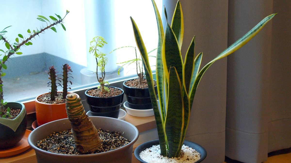 All You Need To Know About indoor plant