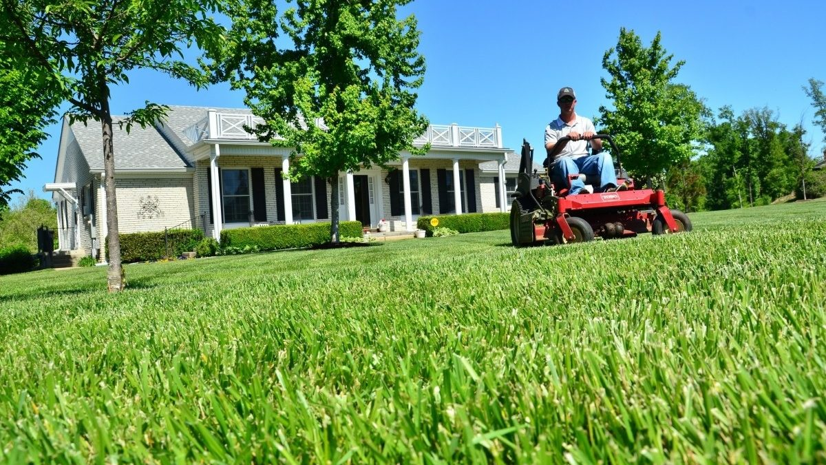 Learn Lawn Care To Add Beauty To Your Place