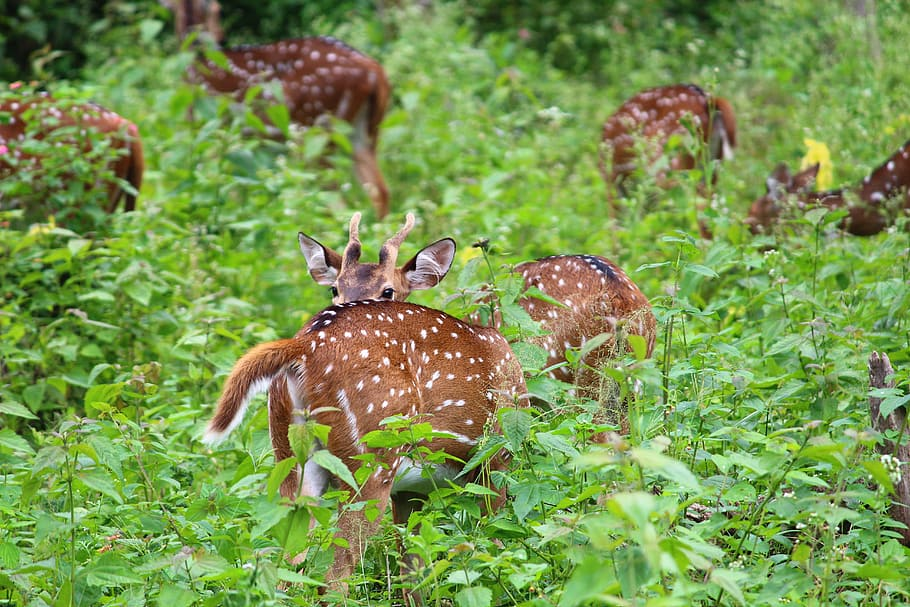 Tips on what you should plant for deer and when to do it